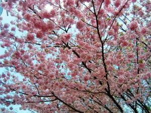 Frühling-2
